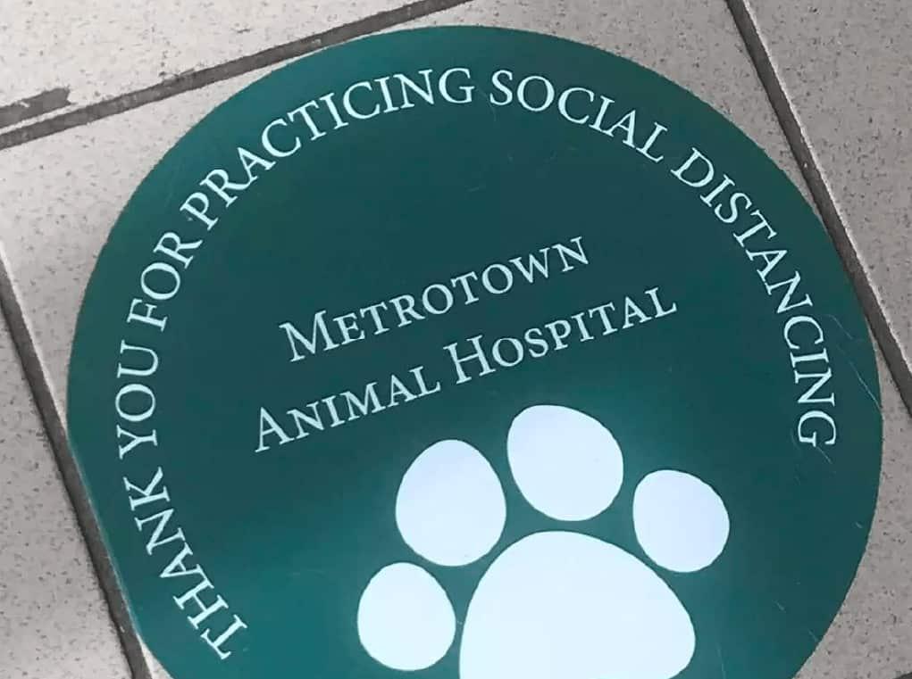 floor decal for animal hospital